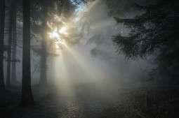 Machine à brouillard (Hazer)